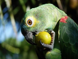 combo-parrot-2