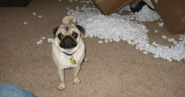 packing-peanut-dog